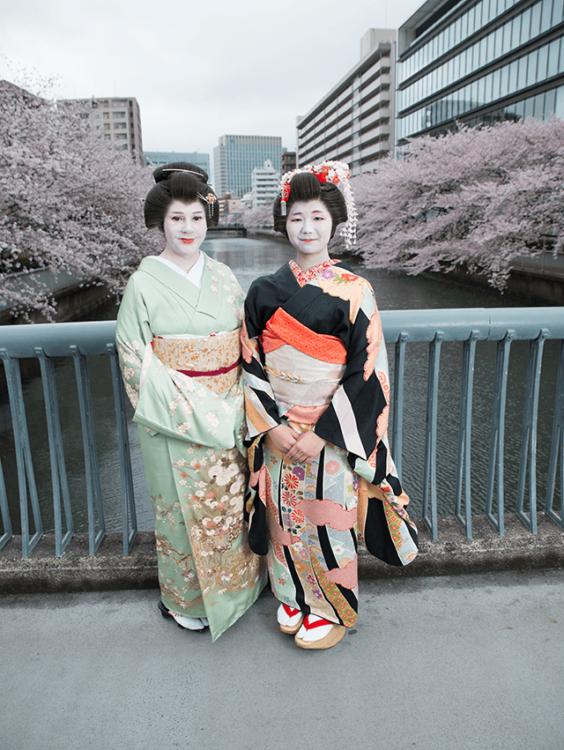 fukagawa geisha sayuki hangyoku cherry blossoms tokyo